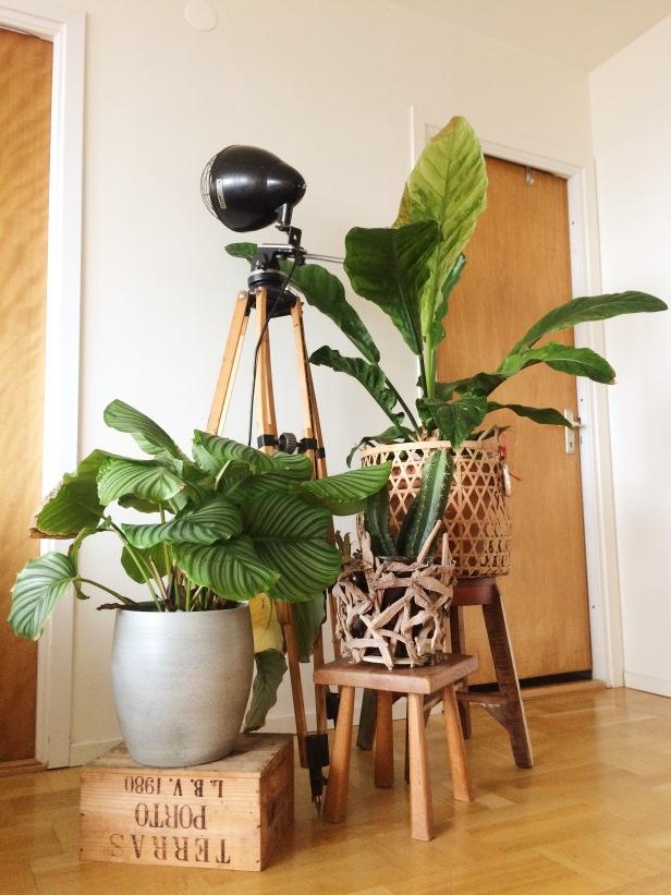 Ik hou van hout en groen (L) En trots op onze statief lamp gemaakt door mijn vader en broertje!